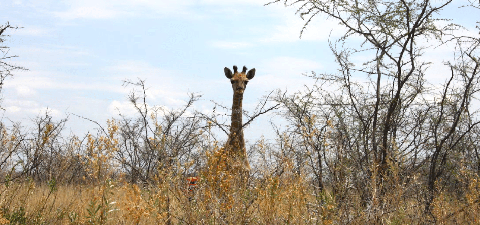 namibia_ninakunkelmann4