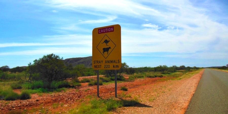 australien-stray-animals