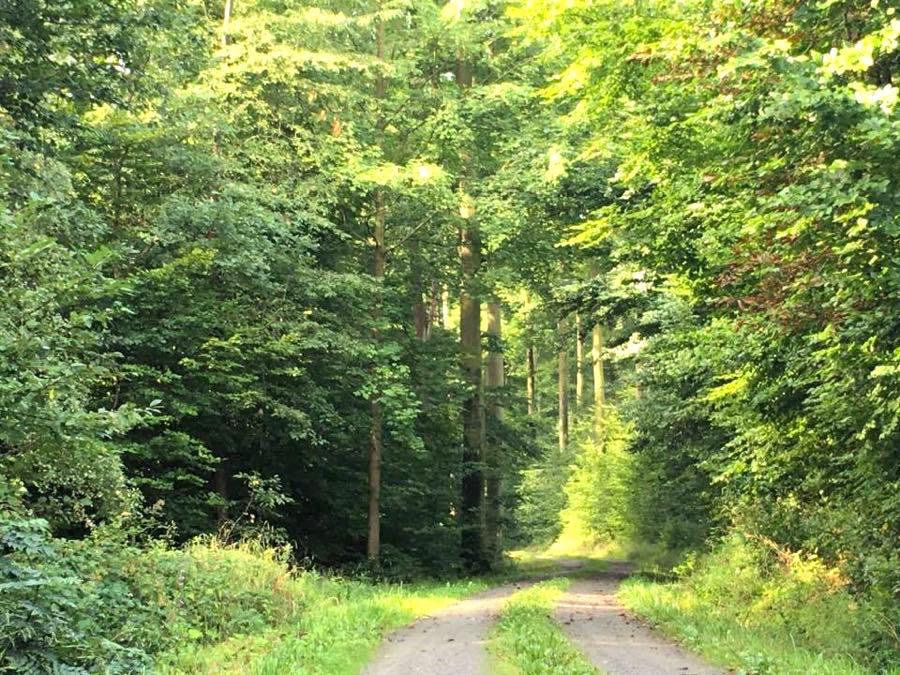 radtour im odenwald3 - Outdoor-Tipp: Meine Radtour im Odenwald