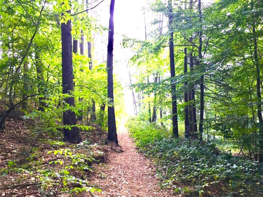 trailrunning pfalz pfalztrail 4 - Outdoor-Sportler
