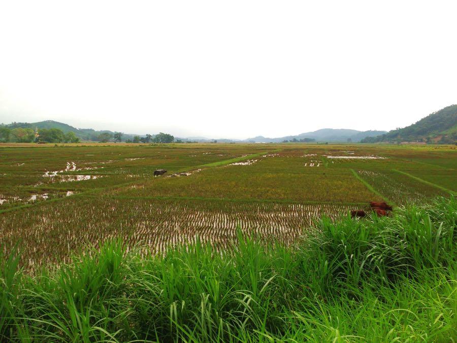 Reisfelder Roadtrip Asien