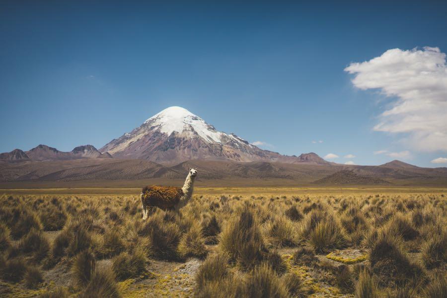 bolivien sajamapark - Bergsteigen und Trekking in Bolivien