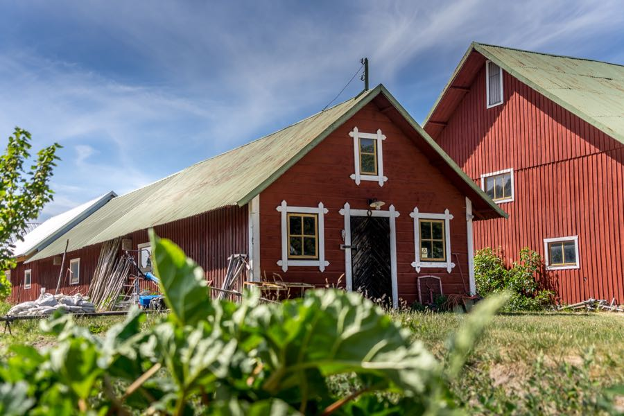 gotland schweden 5 - Schweden Tipps: Gotland und Visby entdecken