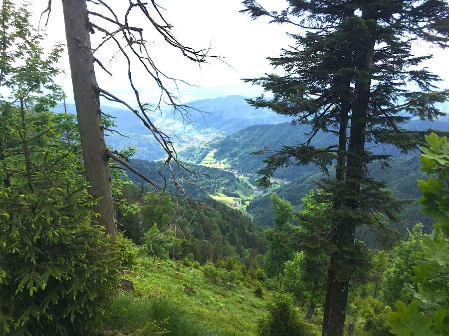 wandern belchen 3 - Die Outdoor-Region Belchen im Schwarzwald