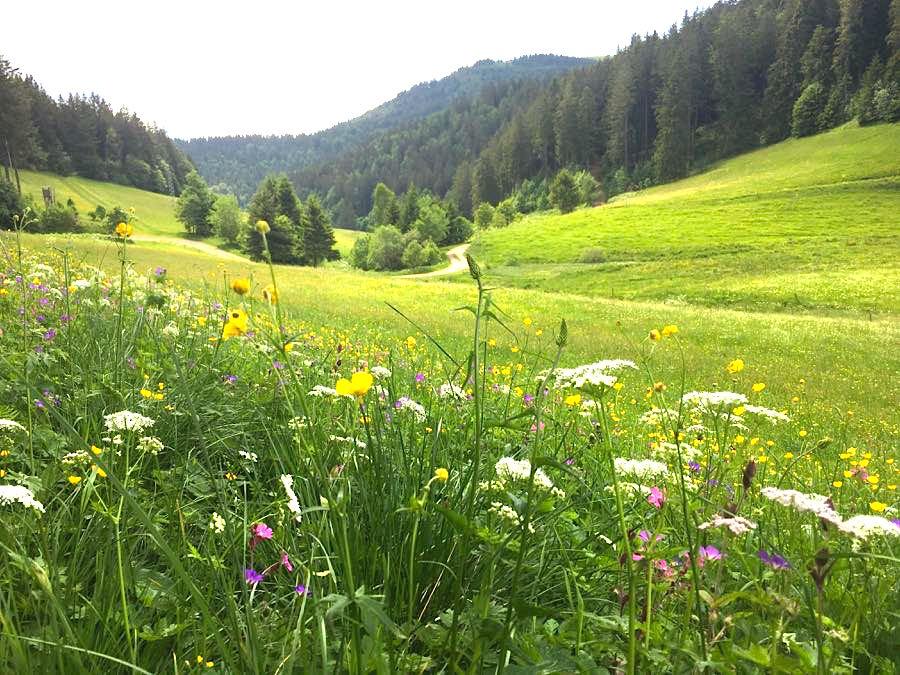 wandern belchen 5 - Die Outdoor-Region Belchen im Schwarzwald