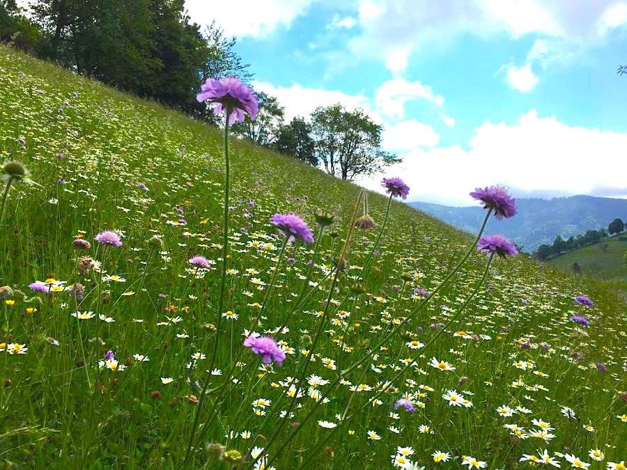 schwarzwald belchen 3 - Belchen: Wandern in der Schwarzwald-Region