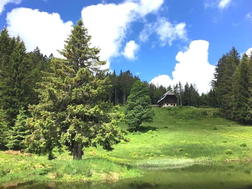 schwarzwald belchen 5 - Belchen: Wandern in der Schwarzwald-Region