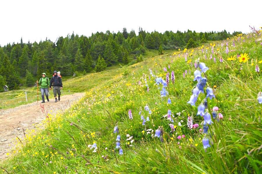 Kärnten Urlaub Wandern Alexanderhütte