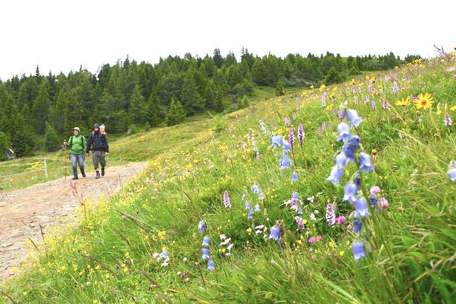 weg der liebe wanderweg kaernten - Outdoor-Tipps für einen Urlaub in Kärnten
