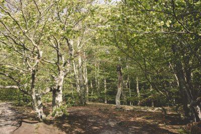 Waldbaden im Nationalpark Söderåsen