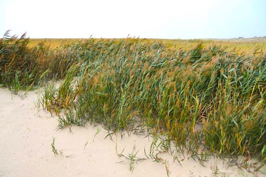 daenemark urlaub strand - Fanö in Dänemark: Urlaub in einem Ferienhaus
