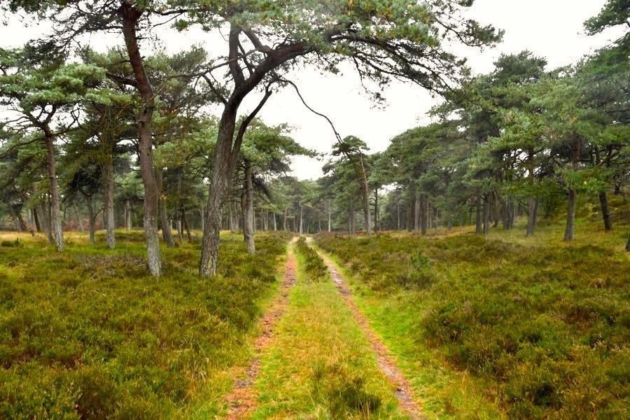 fanoe urlaub ferienhaus 9 - Fanö in Dänemark: Urlaub in einem Ferienhaus
