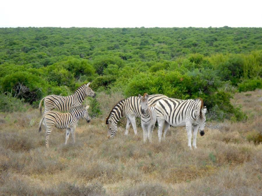 Reiseplanung wann wohin in den Urlaub Südafrika
