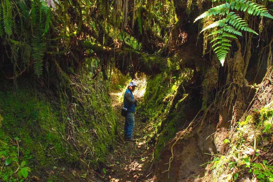 Sanfter Tourismus: Yunguilla in Ecuador