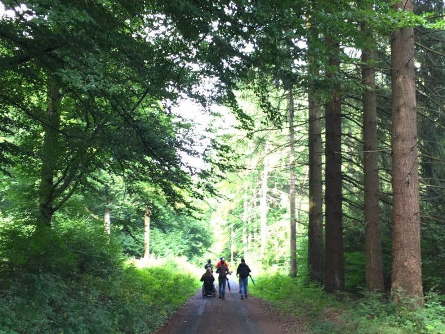 Nachhaltig leben Wandern im Wald