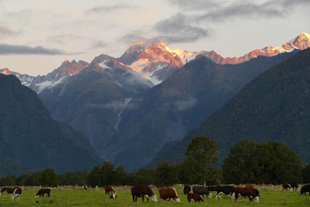 neuseeland rundreise 203 - Neuseeland Rundreise - im Land der Kiwis