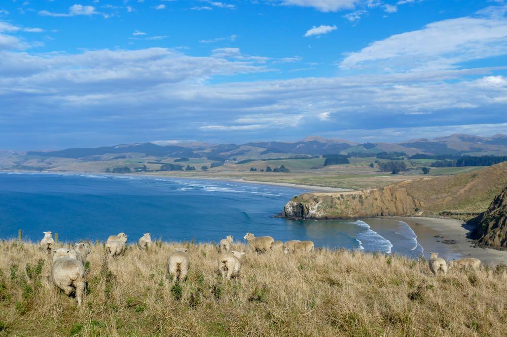 neuseeland rundreise 79 - Neuseeland Rundreise - im Land der Kiwis