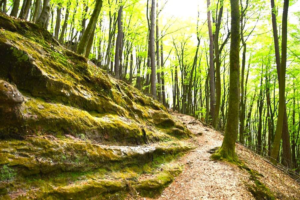 Dahn Jungfernsprung Waldweg
