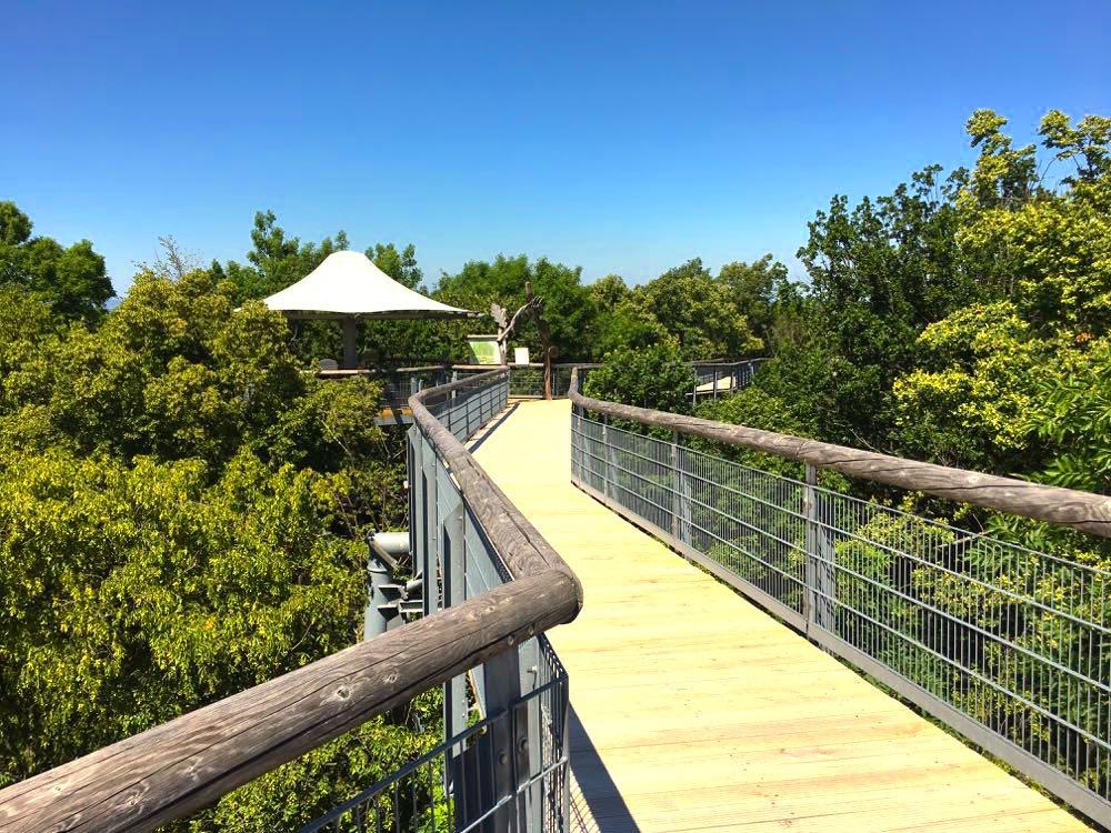 Nationalpark Hainich Baumkronenpfad