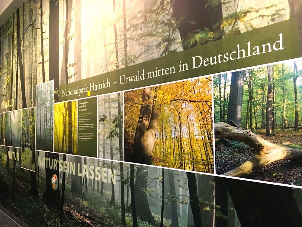 nationalpark hainich 16 - Nationalpark Hainich: Wandern & Biken im Wald