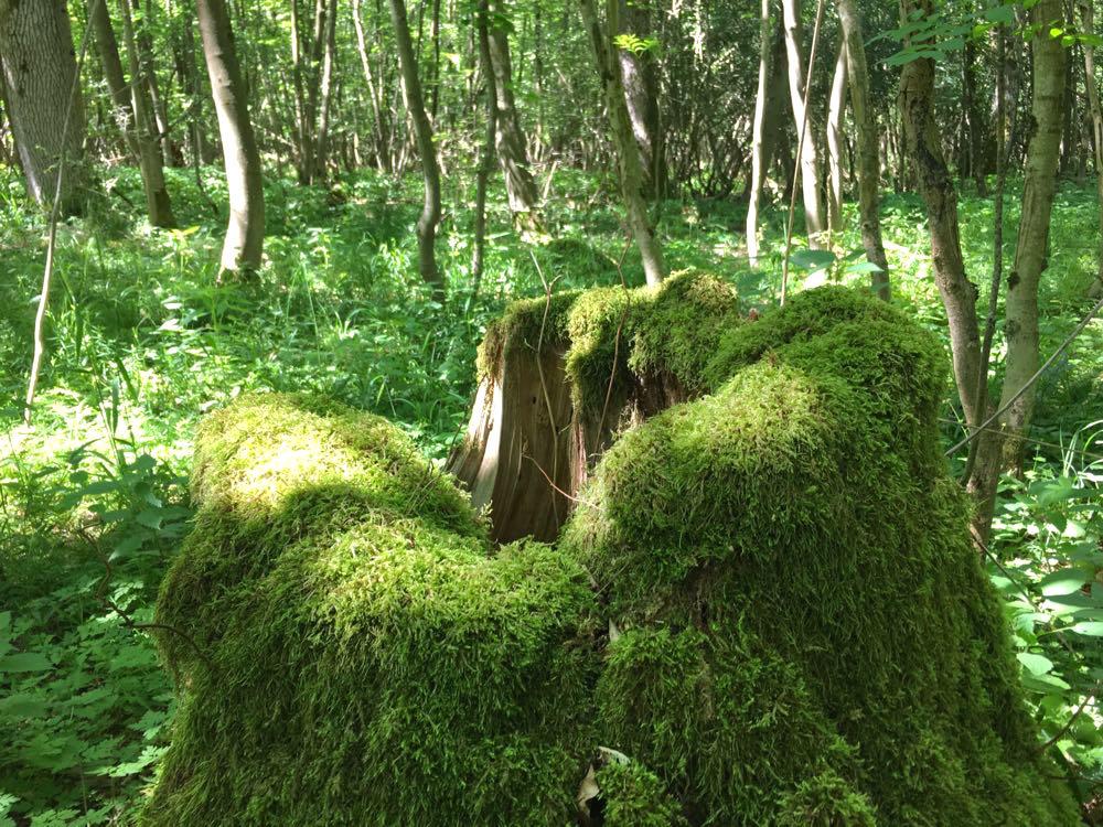 nationalpark hainich 2 - Nationalpark Hainich: Wandern & Biken im Wald