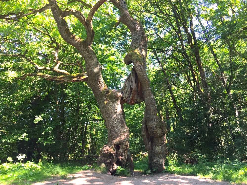 nationalpark hainich 6 - Nationalpark Hainich: Wandern & Biken im Wald