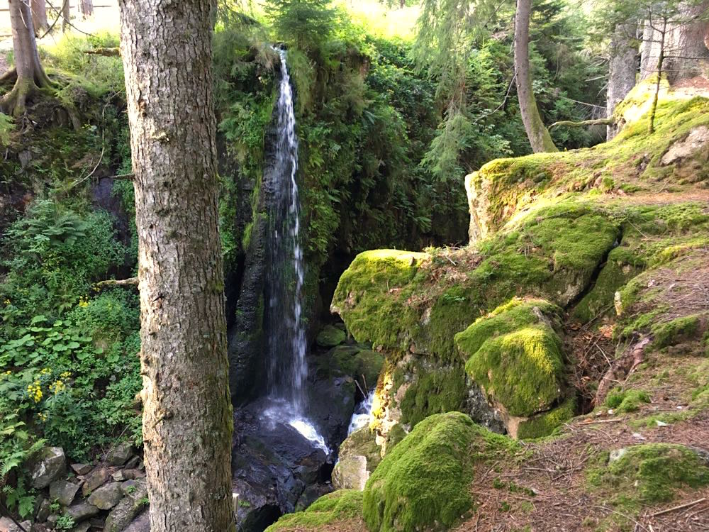 Hochschwarzwald Menzenschwand Geißenpfad Wandern Schwarzwald