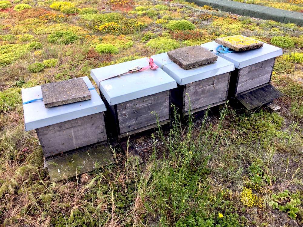 imker hafenbiene bremerhaven 3 - Imker für Bienen, Insekten & Natur im Einsatz