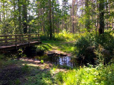Südschwarzwald: Wandern mit Blick auf Ibach