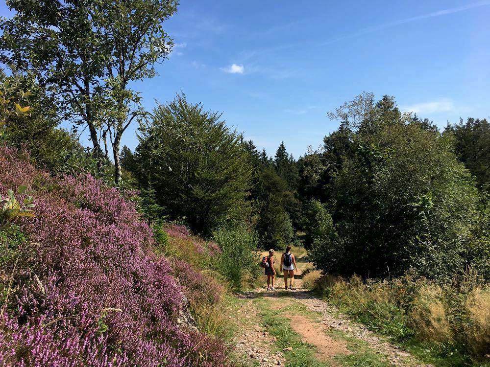 suedschwarzwald wandern ibacher panroamaweg 16 - Südschwarzwald: Wandern mit Blick auf Ibach
