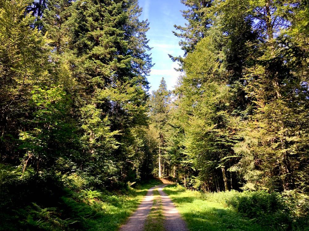 Südschwarzwald Wandern Ibach Panoramaweg