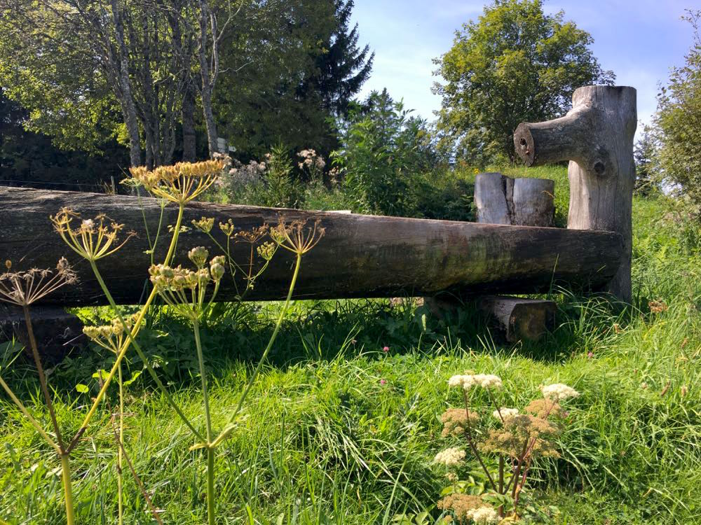 suedschwarzwald wandern ibacher panroamaweg 18 - Südschwarzwald: Wandern mit Blick auf Ibach
