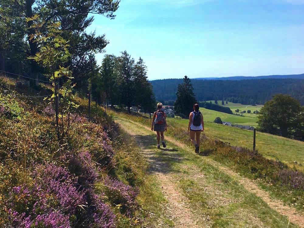 suedschwarzwald wandern ibacher panroamaweg 30 - Südschwarzwald: Wandern mit Blick auf Ibach