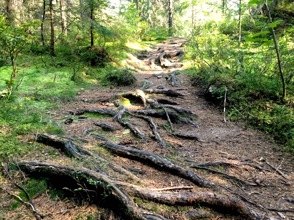 suedschwarzwald wandern ibacher panroamaweg 5 - Südschwarzwald: Wandern mit Blick auf Ibach