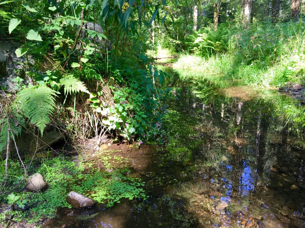 suedschwarzwald wandern ibacher panroamaweg 6 - Südschwarzwald: Wandern mit Blick auf Ibach