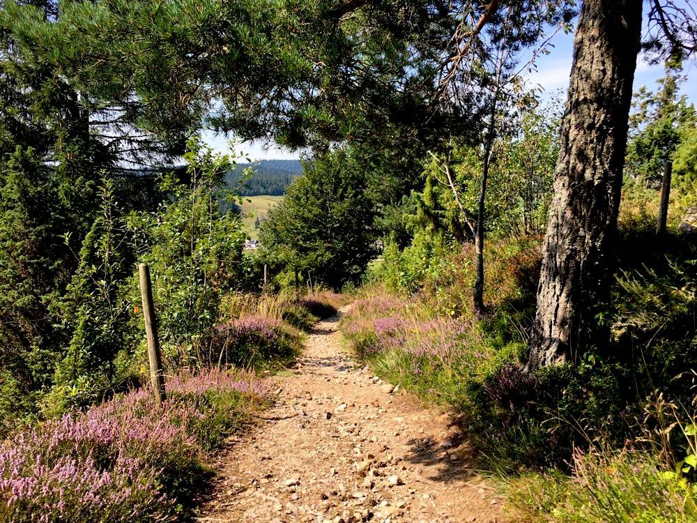 suedschwarzwald wandern ibacher panroamaweg 8 - Südschwarzwald: Wandern mit Blick auf Ibach