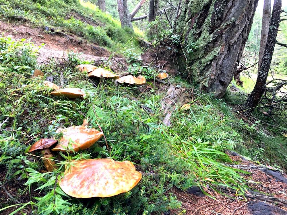 nauders reschenpass tirol meinalmhof 24 - Wandern & Wellness in Nauders in Tirol