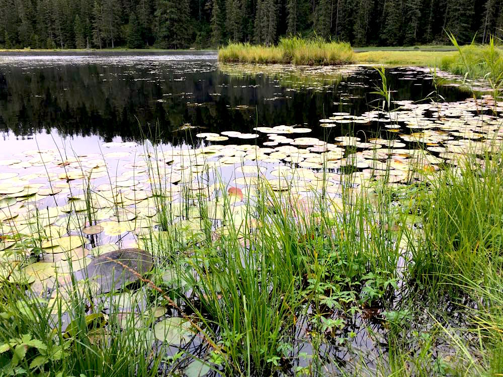 nauders reschenpass tirol meinalmhof 26 - Wandern & Wellness in Nauders in Tirol