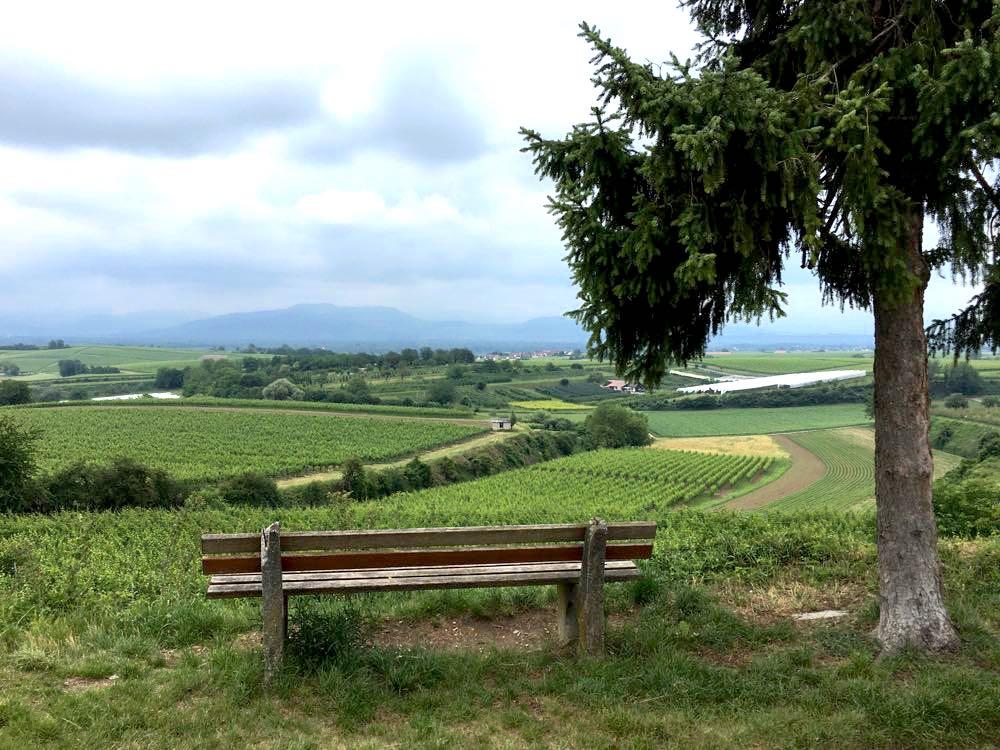badischer weinradweg 30 - Badischer Weinradweg: Hügel, Reben & Genuss