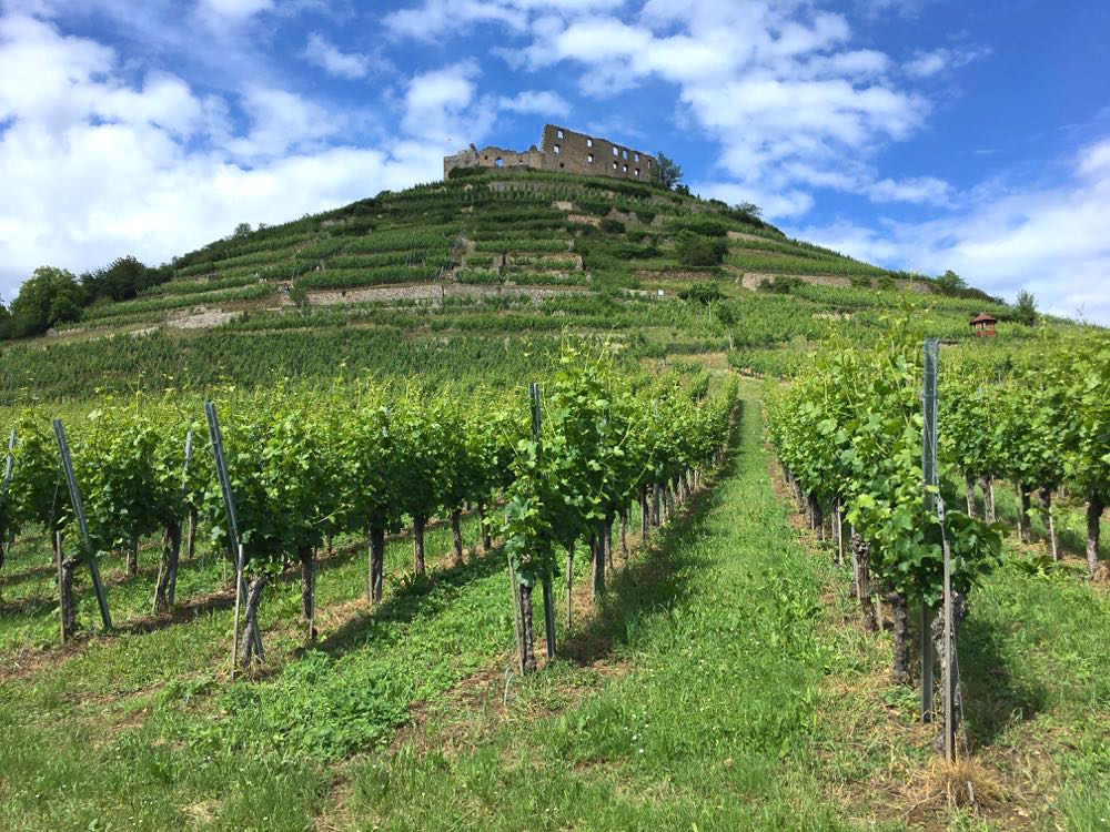 badischer weinradweg 8 - Badischer Weinradweg: Hügel, Reben & Genuss
