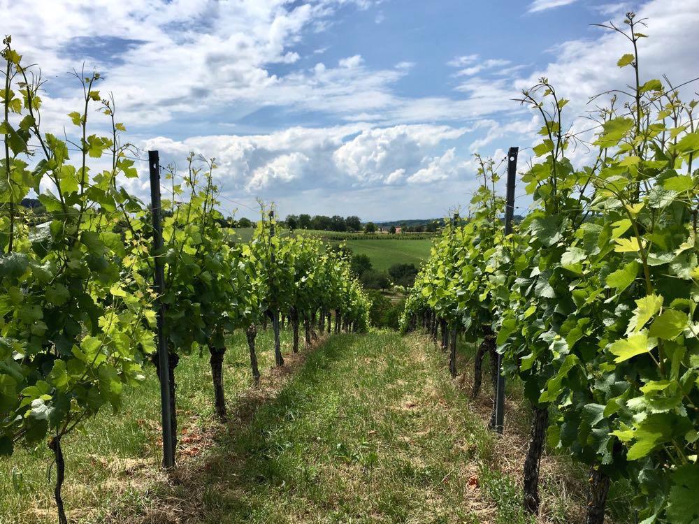 badischer weinradweg 9 - Badischer Weinradweg: Hügel, Reben & Genuss