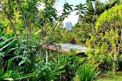 Der Khao Sok Nationalpark in Thailand