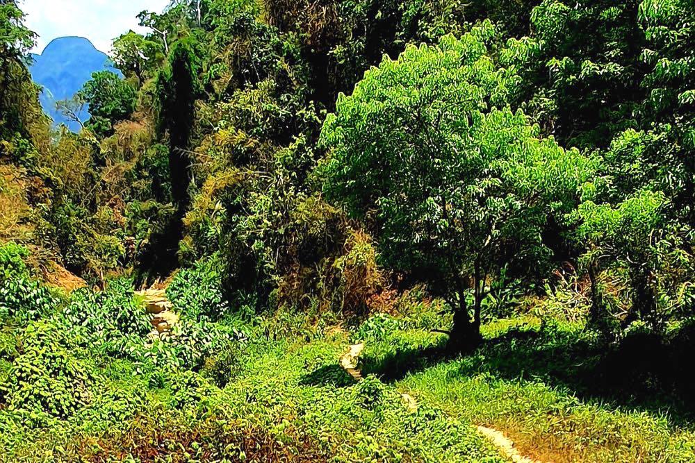khao sok nationalpark thailand 6 - Der Khao Sok Nationalpark in Thailand