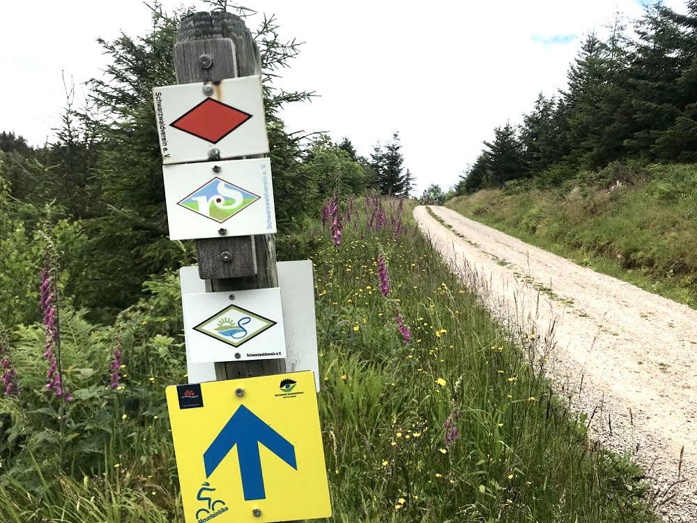 etappe1 schliffkopf lotharpfad wandern schwarzwald - Wandern am Schliffkopf im Schwarzwald