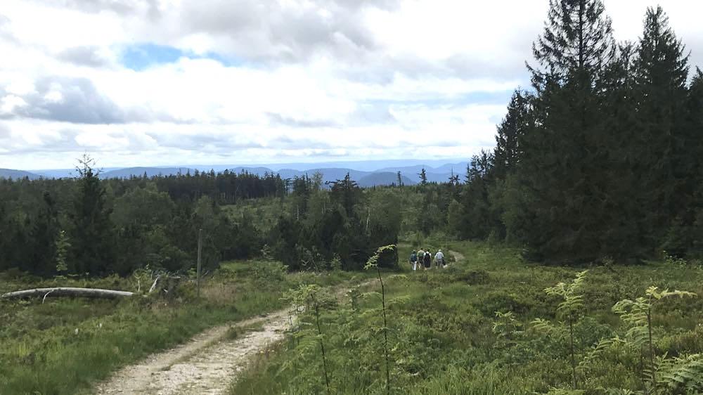etappe1 schliffkopf lotharpfad wandern schwarzwald 2 - Wandern am Schliffkopf im Schwarzwald