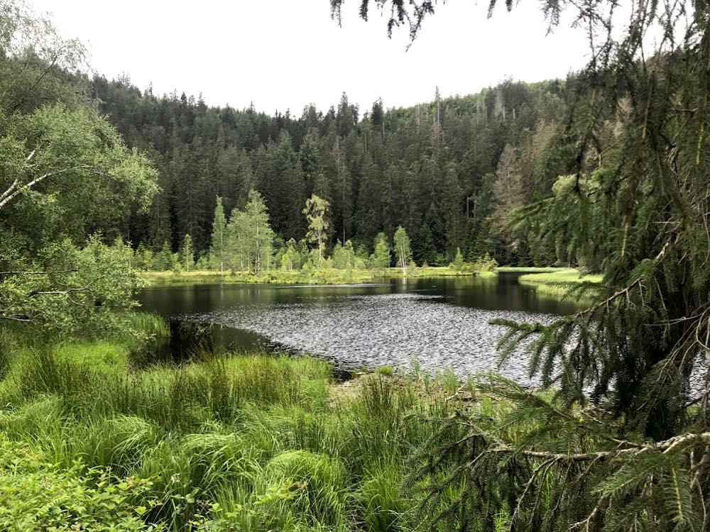 etappe2 lotharpfad buhlbachsee wandern schwarzwald Karsee - Wandern am Schliffkopf im Schwarzwald