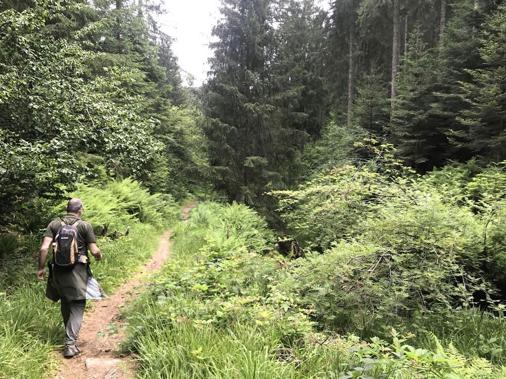 etappe2 lotharpfad buhlbachsee wandern schwarzwald schliffkopf - Wandern am Schliffkopf im Schwarzwald