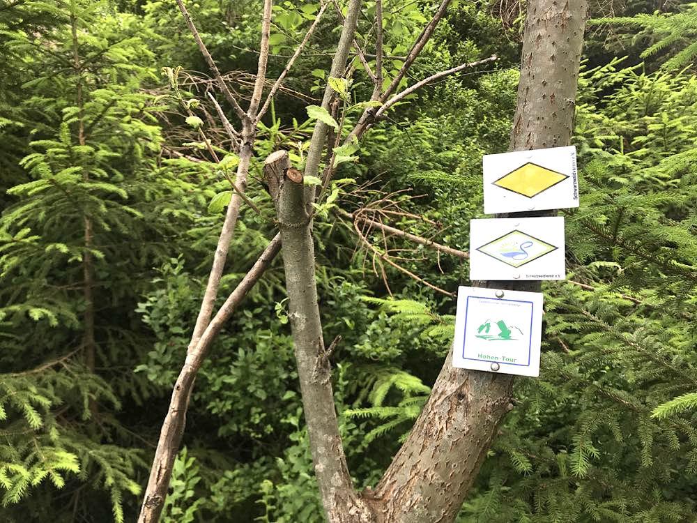 etappe3 lotharpfad buhlbachsee wandern schwarzwald schliffkopf wegweiser - Wandern am Schliffkopf im Schwarzwald