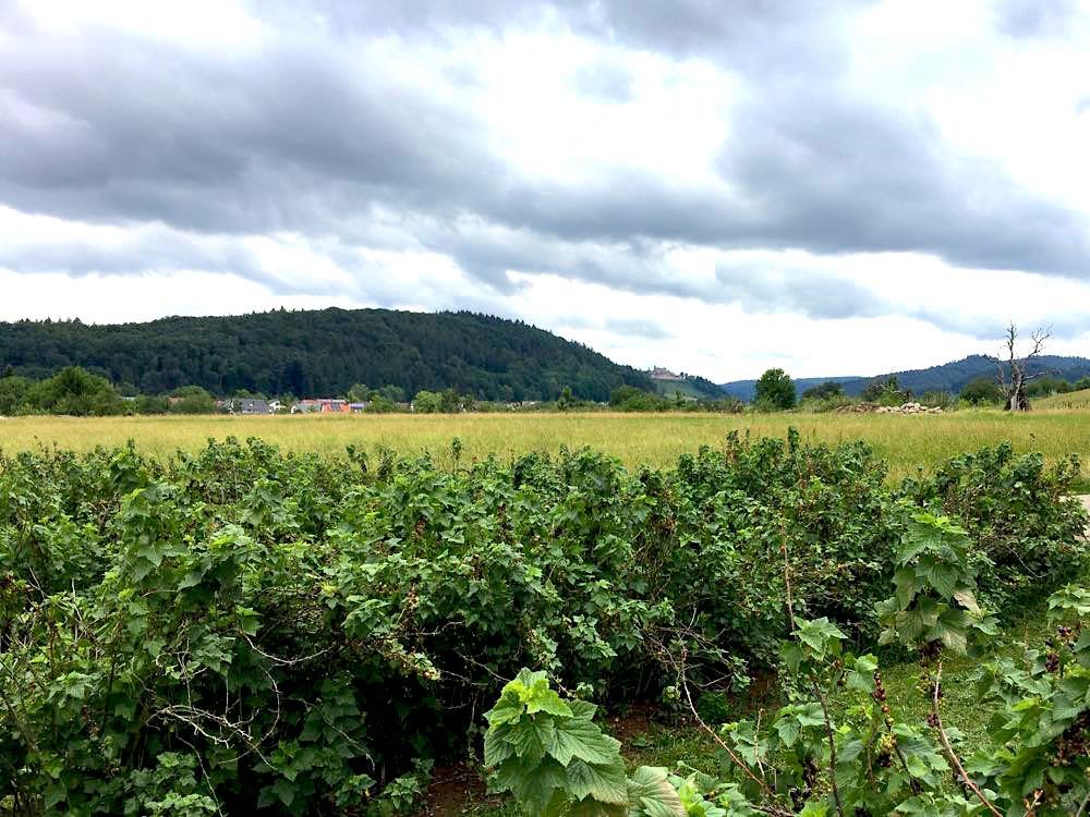 weinland breisgau 10 - Weinland Breisgau: Urlaubsregion in Südbaden