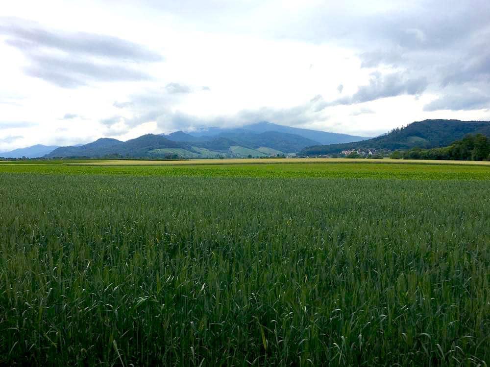 weinland breisgau 8 - Weinland Breisgau: Urlaubsregion in Südbaden